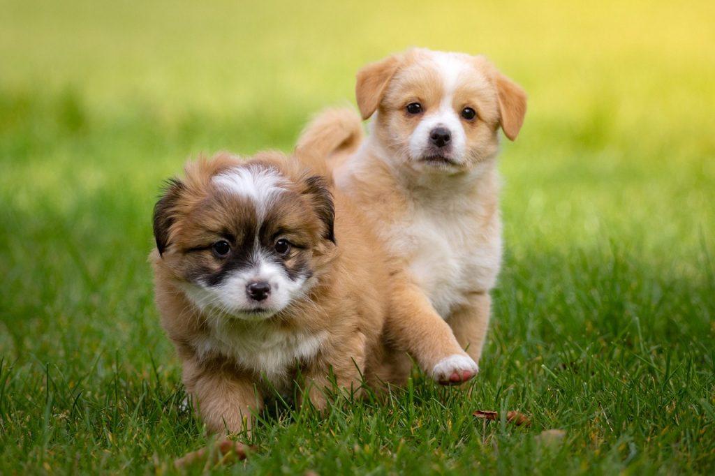 puppylessen vries 11